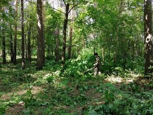 Второй этап благоустройства территории лесопосадки начался в Выксе