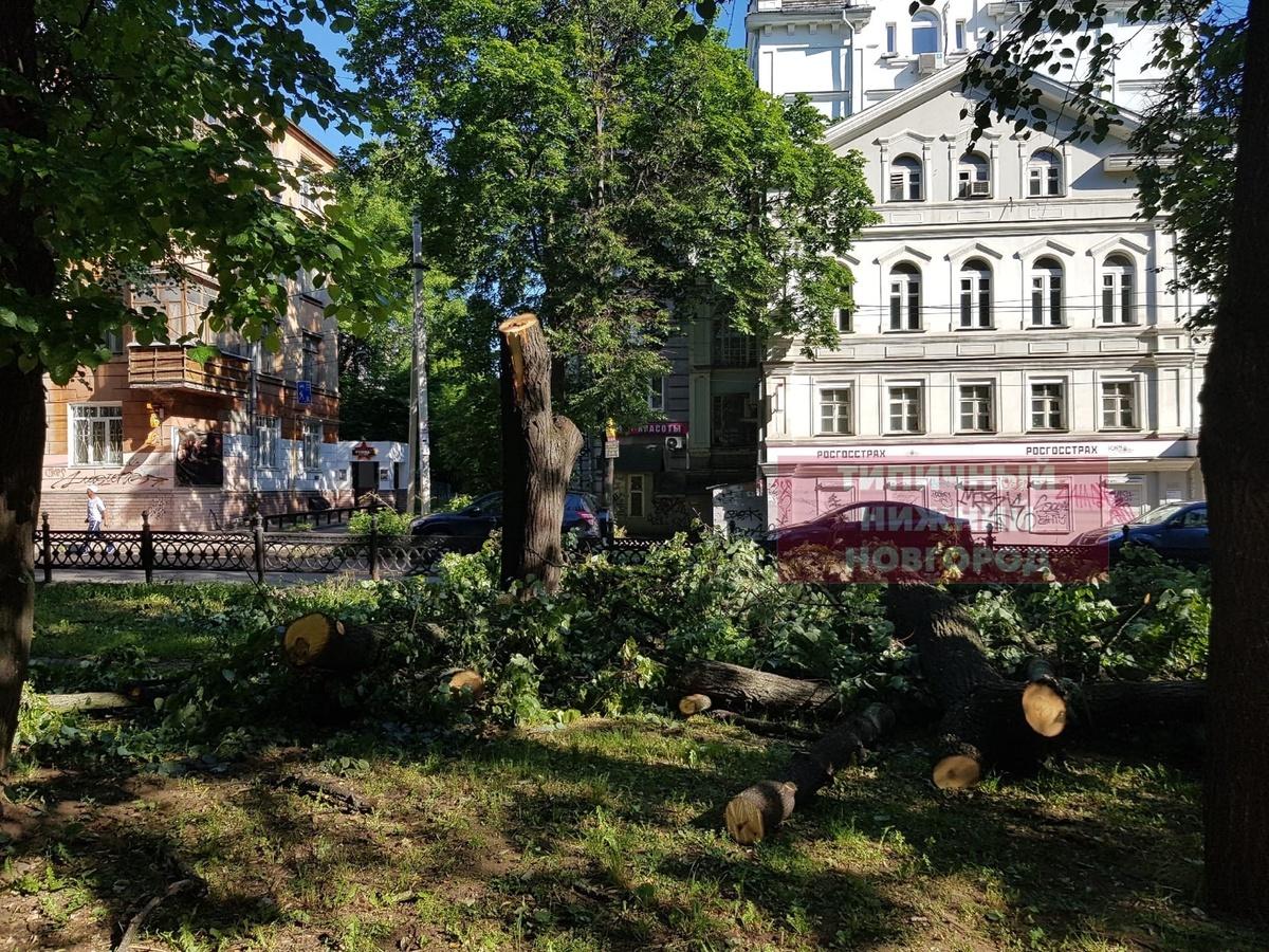 Вырубка деревьев началась в сквере на Звездинке возмутила нижегородцев - фото 1