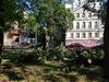 Вырубка деревьев в сквере на Звездинке возмутила нижегородцев