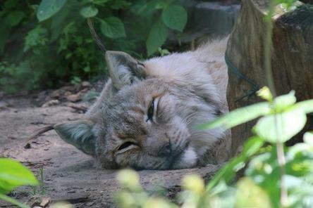 21 животное осталось в закрытом зоопарке «Мишутка»