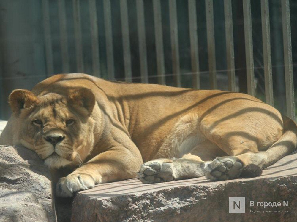 Сотрудников «Мишутки» сократили: в зоопарке осталось более 50 животных
