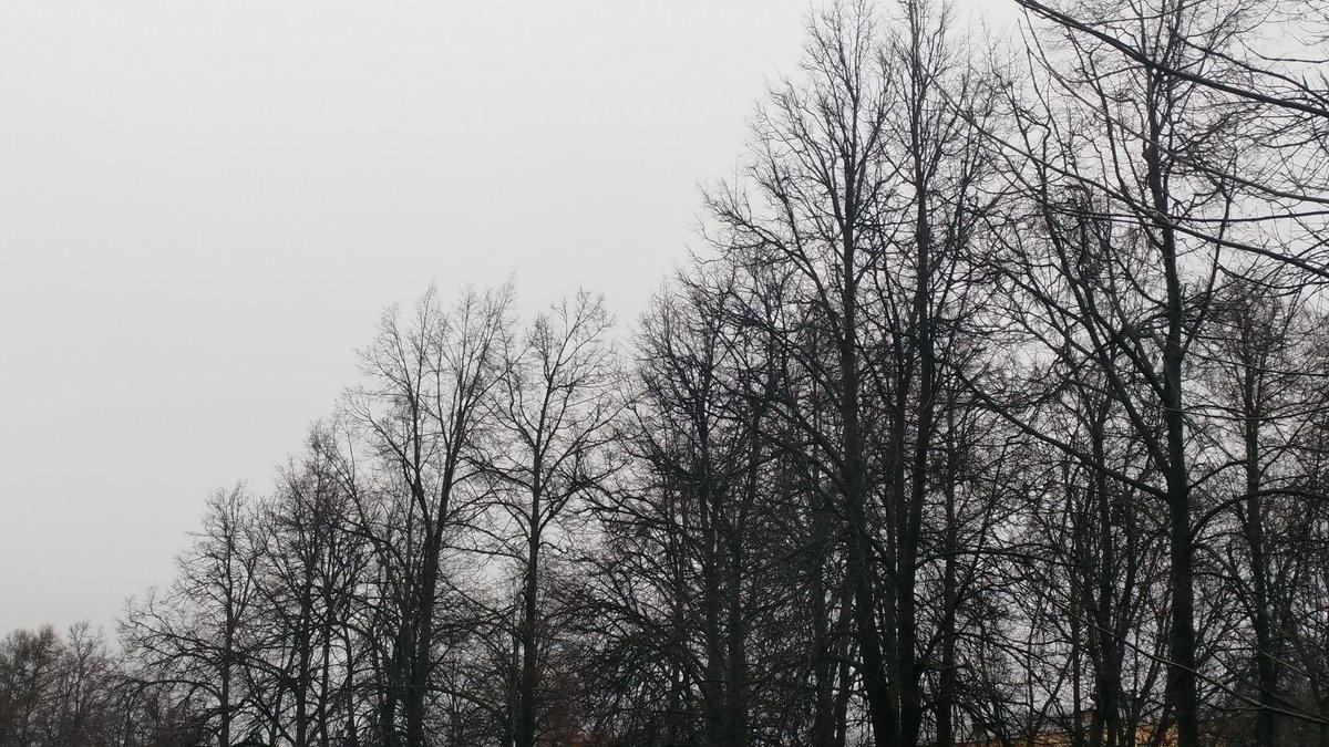 О сильном ветре предупреждают нижегородцев - фото 1