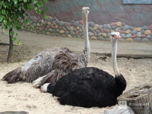 Выжить в пандемию: что происходило в закрытом зоопарке «Лимпопо» - фото 39