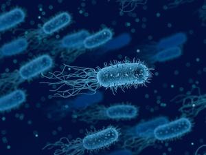 Опасные бактерии обнаружены в нижегородских куриных полуфабрикатах
