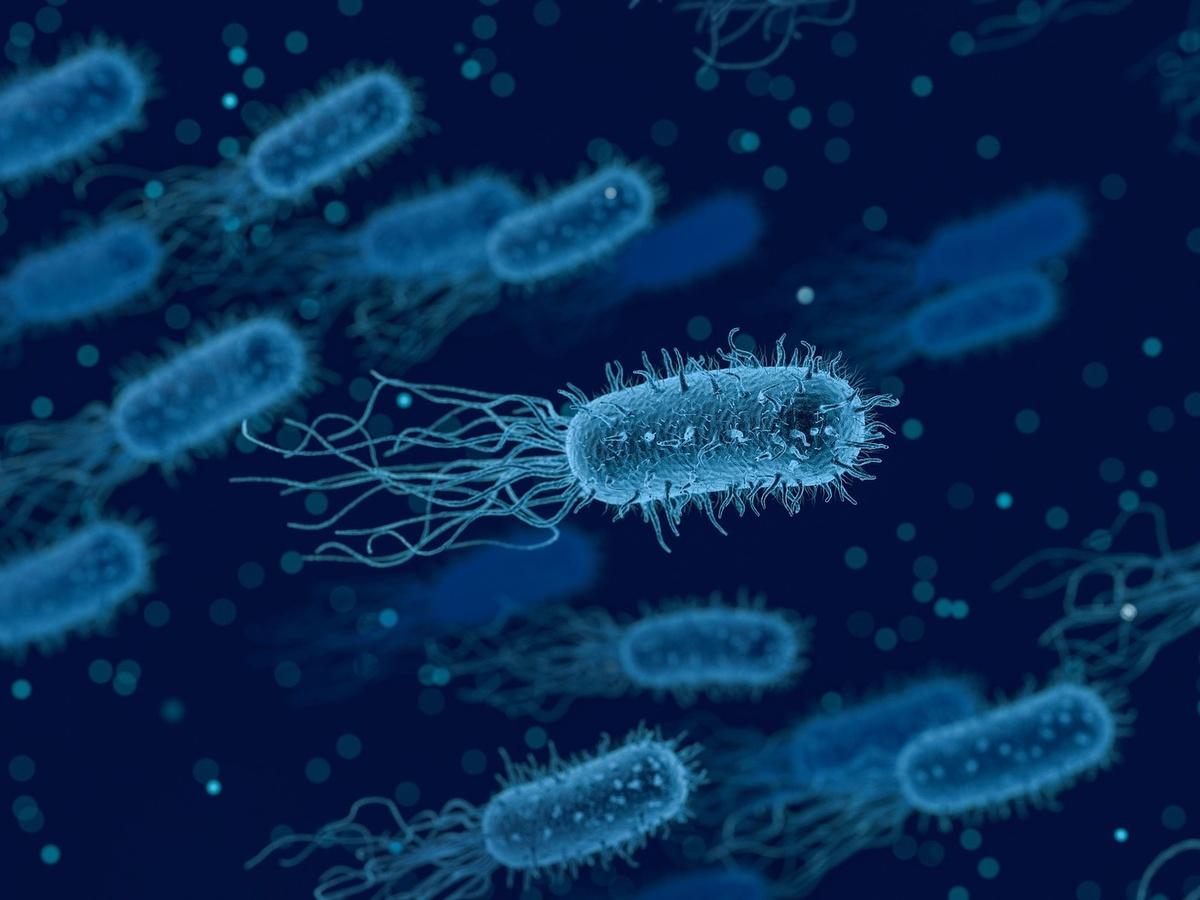 Опасные бактерии обнаружены в нижегородских куриных полуфабрикатах - фото 1