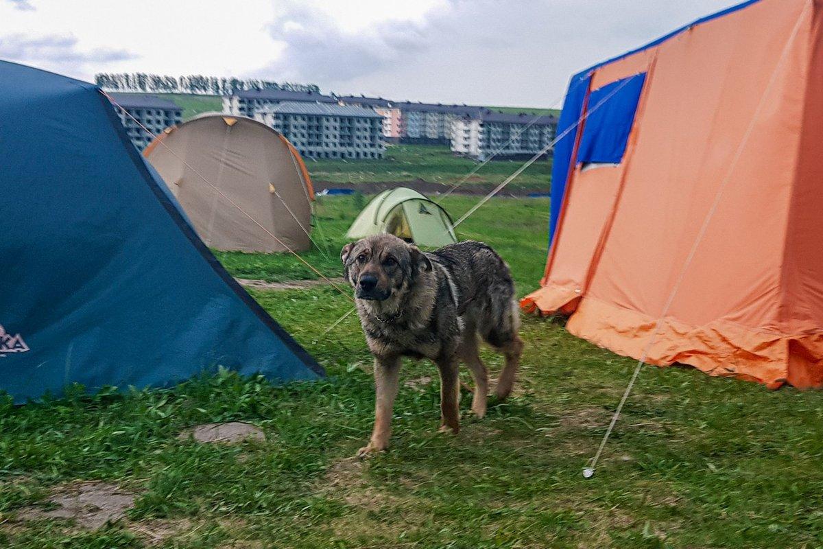«Либо бульдозеры зайдут в лагерь, либо краны — на стройку», — обманутые дольщики - фото 2