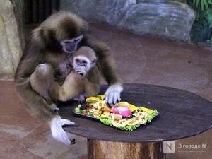 Овощи и творог обитателям зоопарка «Лимпопо» привезли нижегородские волонтеры