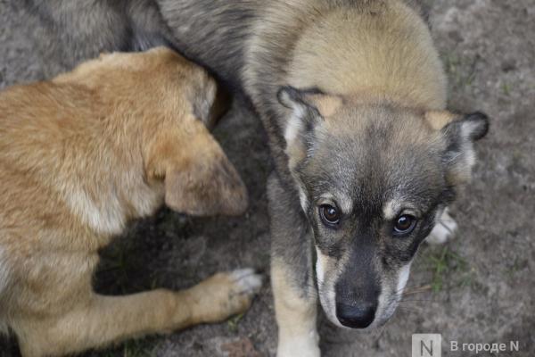 Догхантеры в Нижнем Новгороде: как обезопасить свою собаку