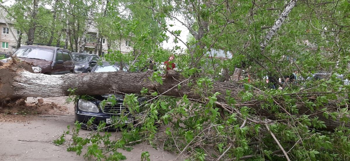 Ураган в Нижегородской области повалил деревья на дороги и автомобили - фото 1