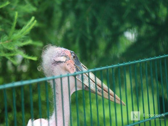 Уникальный вольер для марабу построили в нижегородском зоопарке - фото 18