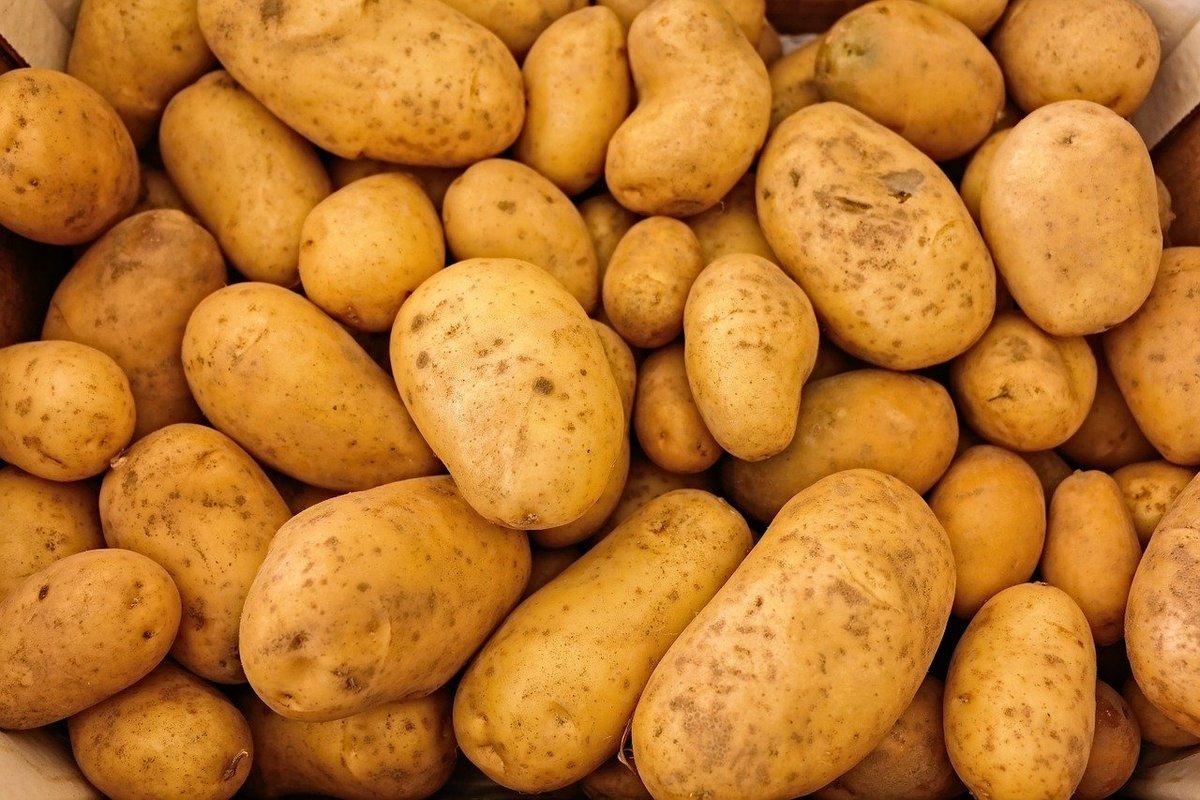 На 90 000 тонн увеличилось производство картофеля в Нижегородской области - фото 1