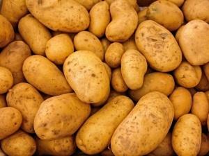 На 90 000 тонн увеличилось производство картофеля в Нижегородской области