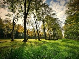 Благоустройство Светлоярского парка в Сормовском районе завершено на 20%